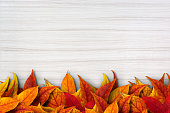Colorful autimn leaves on white wooden background