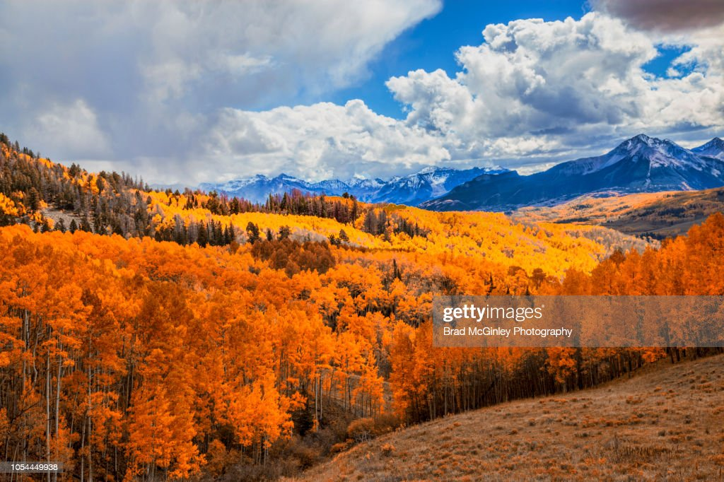 Colorful Autumn Aspen's : Stock Photo