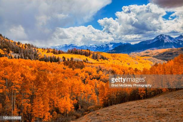 colorful autumn aspen's - mt wilson colorado stock photos and pictures
