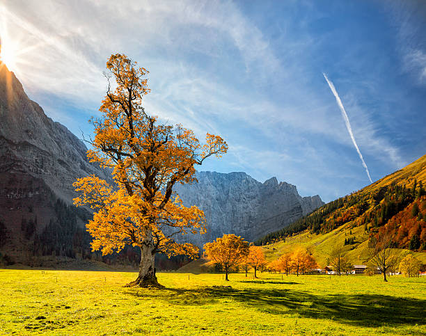 Colorful Autumn At Ahornboden In Karwendel Alps Wall Art