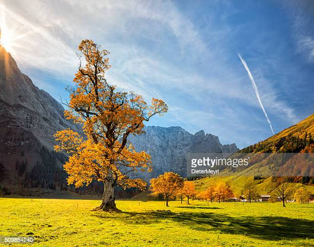 colorful autumn at ahornboden in karwendel alps - maple tree stock pictures, royalty-free photos & images