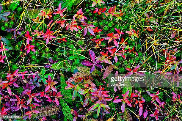 Colorful autumn groundcover plants