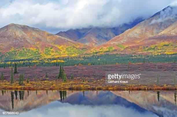 Colorful autumn landscape, mountain tundra and Taiga, Lake with reflection, Denali State Park, Alaska, USA