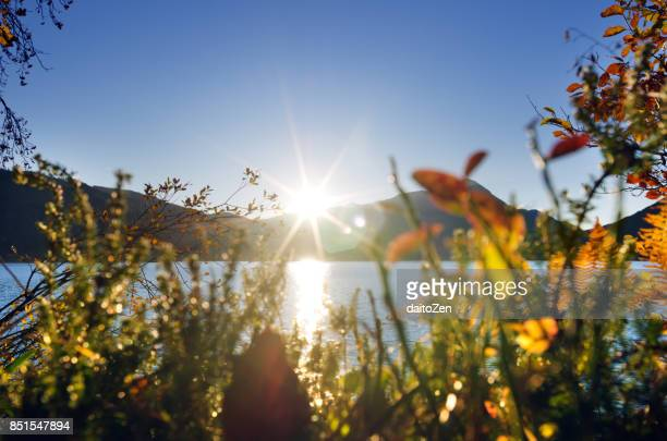 Colorful autumn leaves back lit by low October sun, Lake Walchensee, Upper Bavaria, Germany