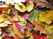colorful autumn leaves closeup abstract background