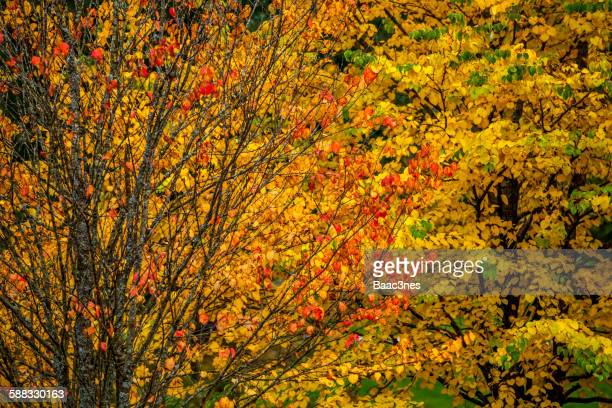 Colorful autumn leaves on a tree