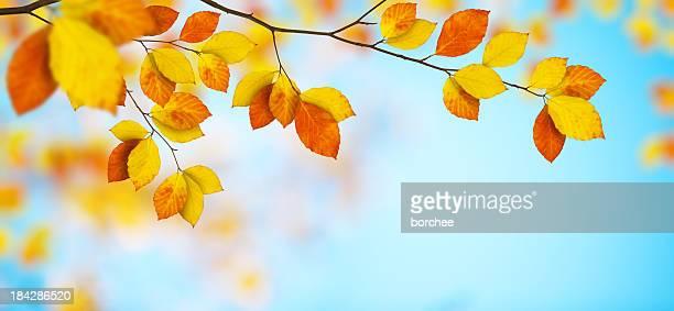 Folhas de outono colorido