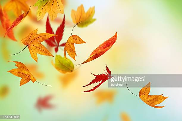 colorful autumn - autumn falls stock pictures, royalty-free photos & images