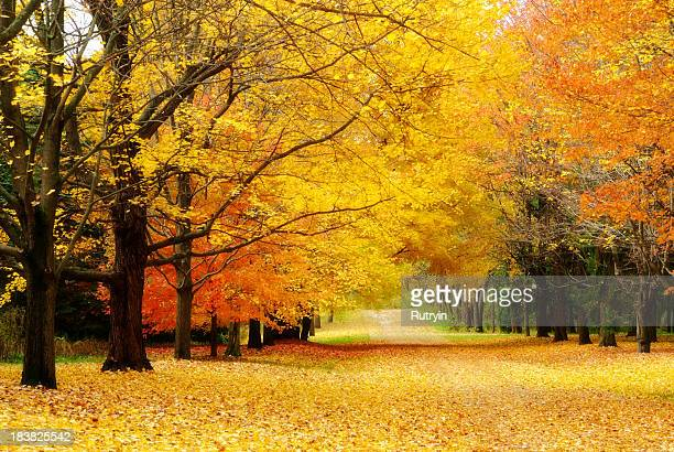 Colorful autumn trees line leaf covered lane