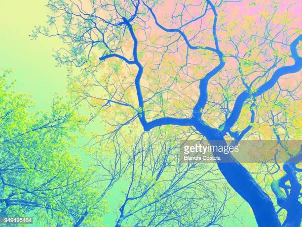 Colorful background of branches of trees in bloom