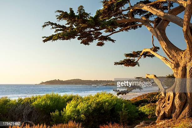 bunte strand in carmel-by-the-sea - california stock-fotos und bilder