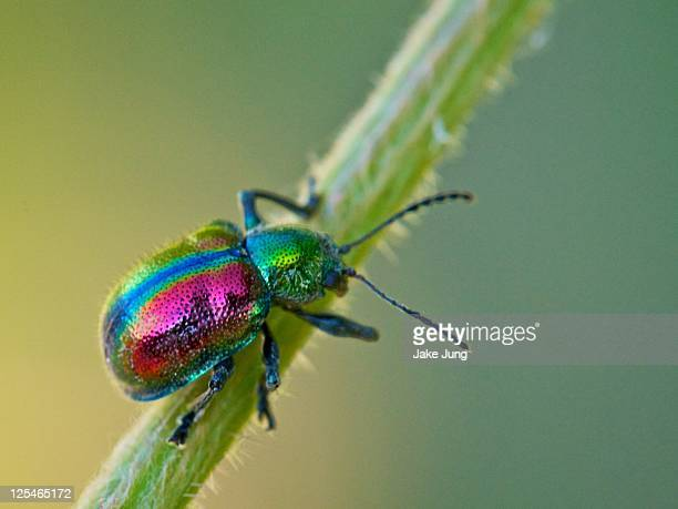 colorful beetle - beetle stock pictures, royalty-free photos & images