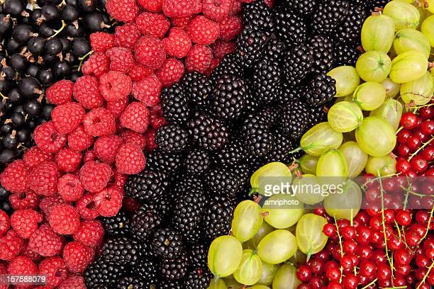 Coloré de fruits rouges