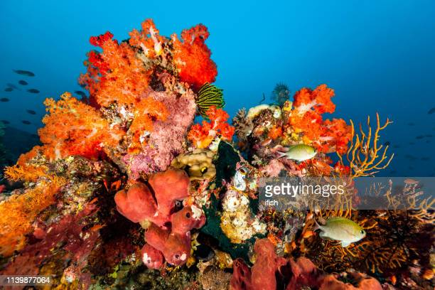 colorful biodiversity at deep outer reef, komodo nationalpark, indonesia - indo pacific ocean stock pictures, royalty-free photos & images
