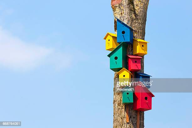colorful birdhouses on tree - birdhouse stock pictures, royalty-free photos & images
