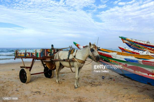 colorful boats and horse cart on yoff beach, dakar, senegal - frans sellies stock pictures, royalty-free photos & images