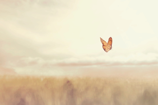 colorful butterfly flying free in the middle of nature 981802336
