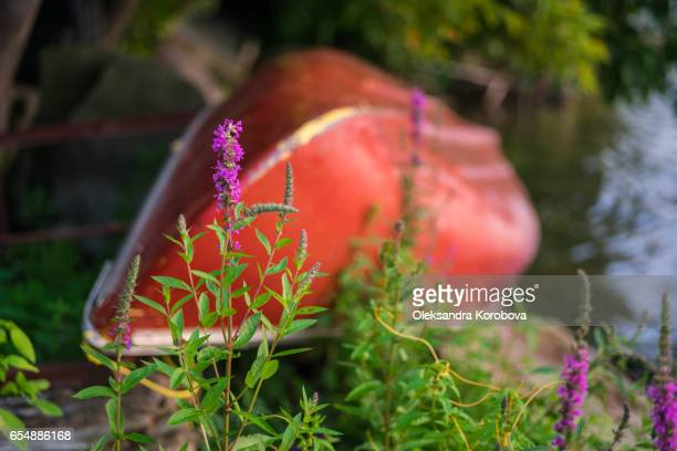 colorful canoe by the lake with a pink wild flower in the foreground. - istock images stock pictures, royalty-free photos & images