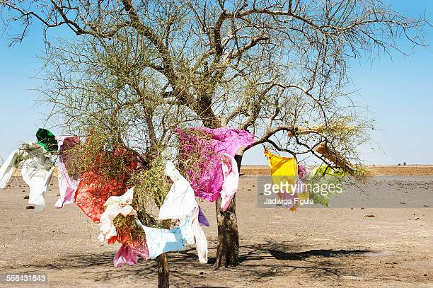 colorful clothes hang on a tree. south sudan. - south sudan stock pictures, royalty-free photos & images