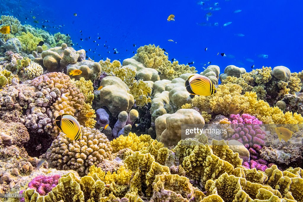 Colorful Coral Reef on Red Sea nearby Marsa Alam : Stock Photo
