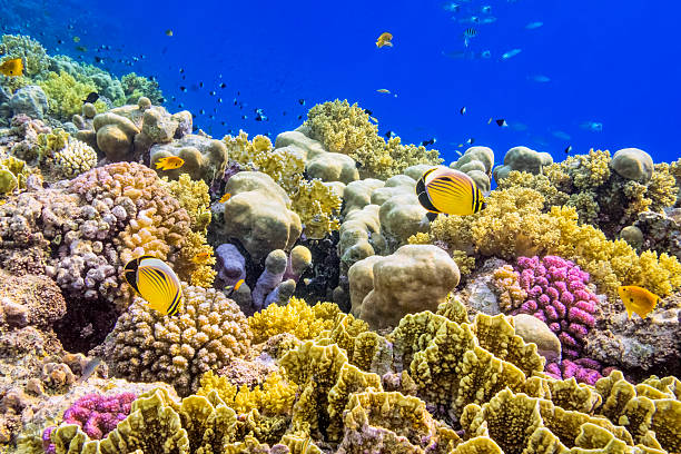 Colorful Coral Reef On Red Sea Nearby Marsa Alam Wall Art