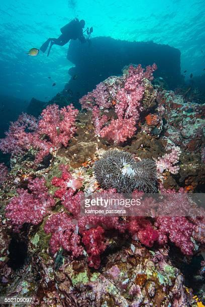 Colorful Coral Reef, Similan Islands