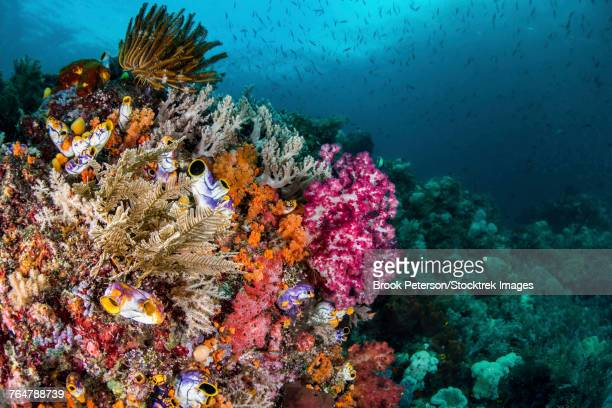 A colorful coral reef with fish, Raja Ampat, Indonesia.