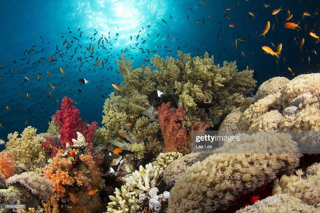 Colorful Corals : Foto de stock