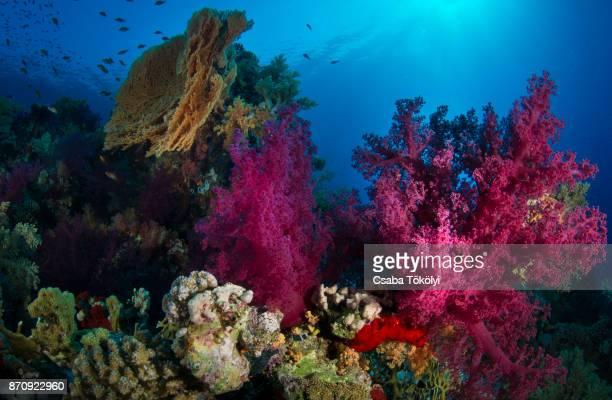 Colorful corals underwater
