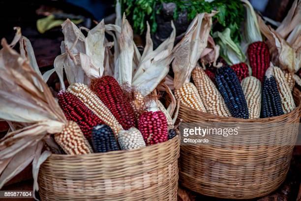 Colorful Corn maize or Flint corn