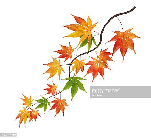 カラフルな曲線の秋のブランチ