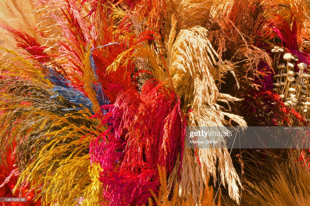 Colorful Dried Plants near the Cathedral Of Brasilia : Stock-Foto