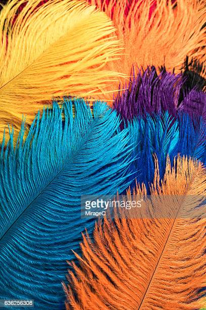 Colorful Dyed Ostrich Feathers