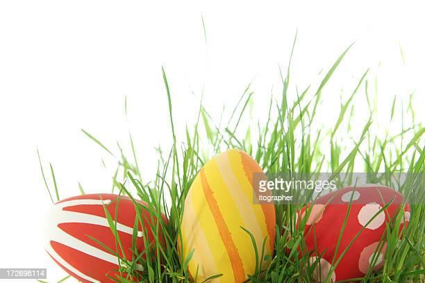 Bunte Ostern Eier auf Gras
