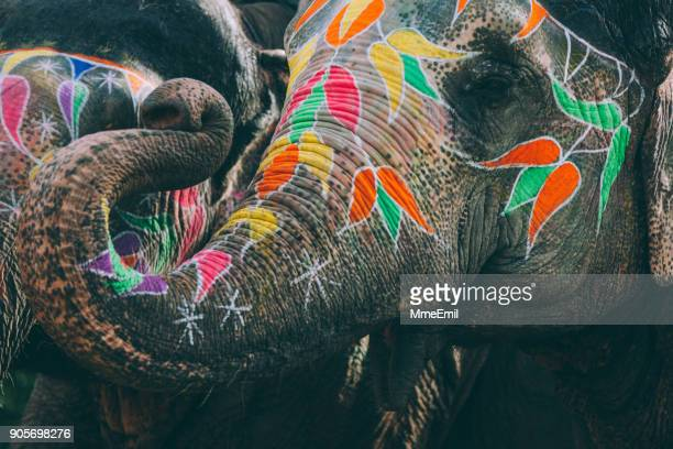 colorful elephant face painted and decorated. jaipur, rajasthan, india - indian elephant stock pictures, royalty-free photos & images