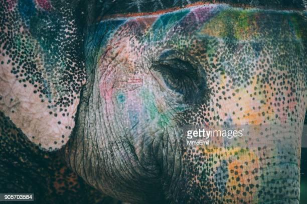 Bunte Elefanten Gesicht bemalt und dekoriert. Jaipur, Rajasthan, Indien