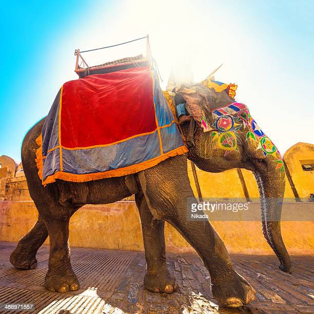 colorful elephant in india - indian elephant stock pictures, royalty-free photos & images