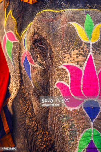 Colorful elephant, Jaipur