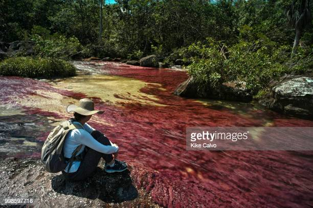 Colorful endemic freshwater red plants known as macarenia clavigera create colorful natural tapestries at the Red Tapestry section of the Cano...