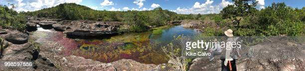 Colorful endemic red freshwater plants known as macarenia clavigera create colorful natural tapestries along the creeks of Cano Cristales river...