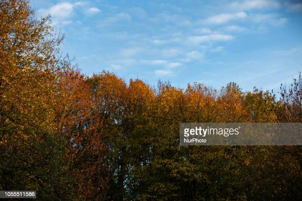 Colorful fall trees and a cloudy blue skyImpressions of the Fall in Munich on October 30 2018