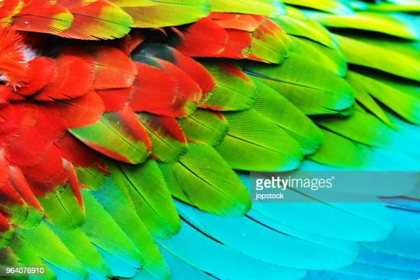 colorful feathers of a scarlet macaw - feather stock pictures, royalty-free photos & images