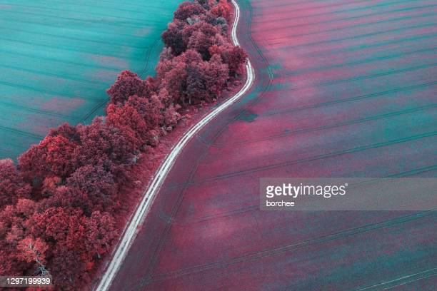 colorful fields - pink colour stock pictures, royalty-free photos & images