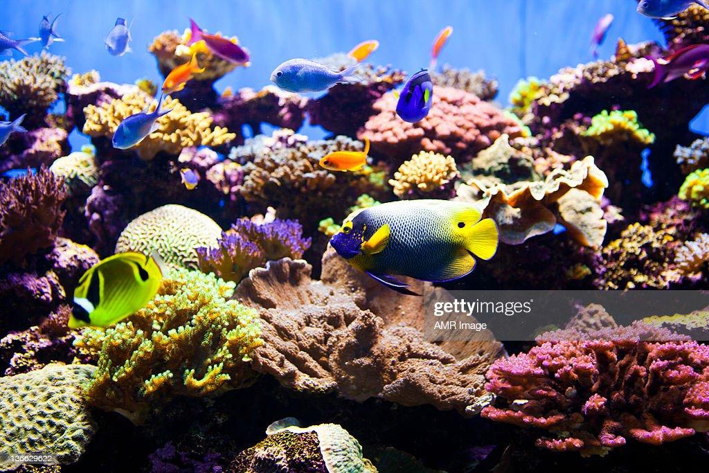 Colorful Fish Aquarium : Stock Photo