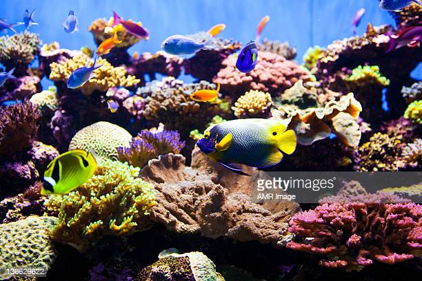 colorful fish aquarium - armored tank stock photos and pictures