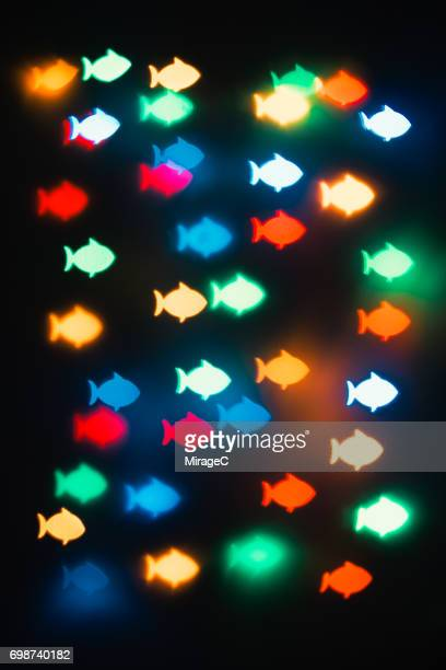 Colorful Fish Bokeh