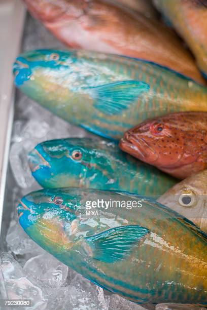 Colorful fish displayed