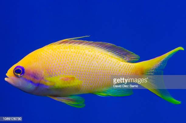 colorful fish - pez fotografías e imágenes de stock