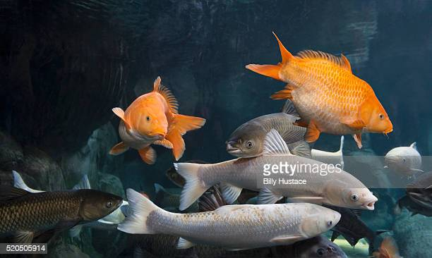 Colorful fish swimming in clean water