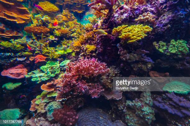 colorful fishes and corals in the aquarium - reef stock pictures, royalty-free photos & images